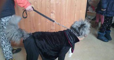 Imagen de la I edición del concurso de disfraces para mascotas