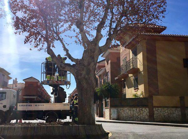 Vegas del Genil planta cara a la 'invasión' de palomas colocando redes en todos los árboles