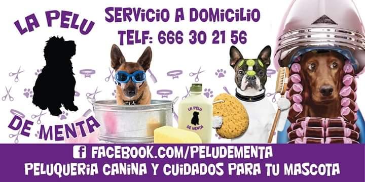 FB IMG 1588435171445